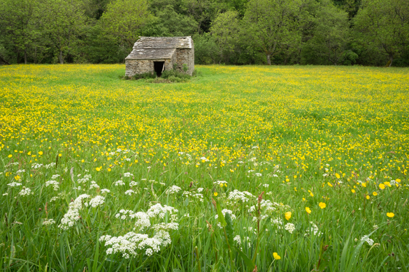 Swaledale Wildflower Meadows Workshop with Mark Banks for the Royal Photographic Society