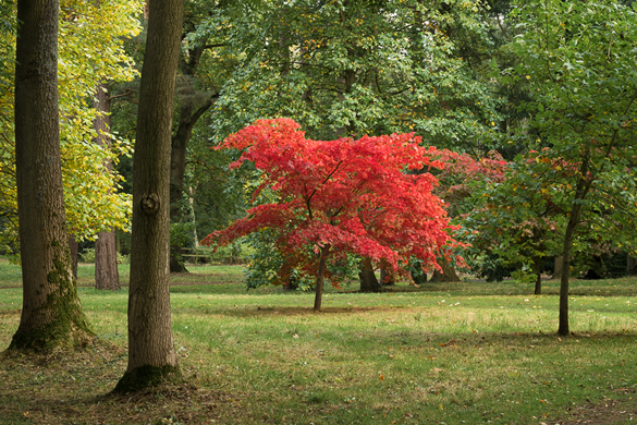Autumn colours at Thorp Perrow Arboretum