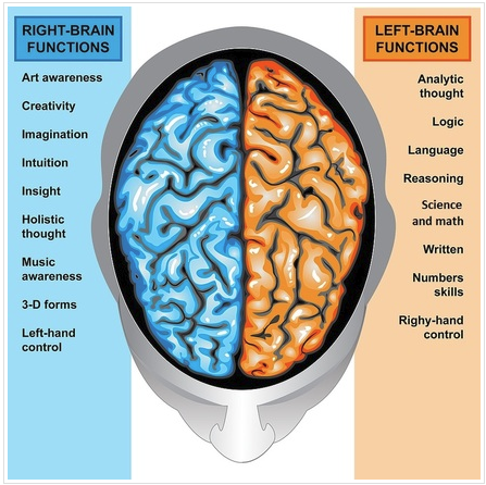 Left and right brained thinking